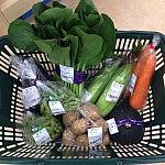 地元の野菜を食べると、季節を感じられる